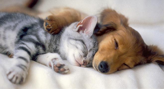 Kitten_and_puppy_sleeping